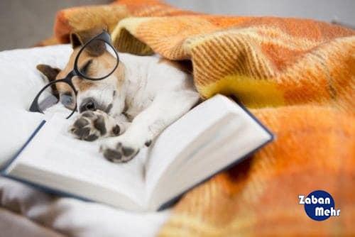 آموزش زبان در خواب,یادگیری زبان در خواب